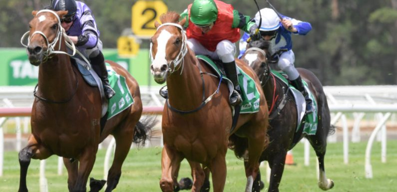 Tips and race-by-race preview for Tamworth on Sunday