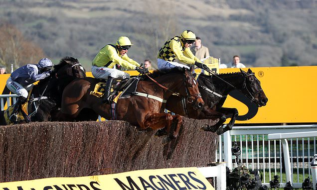 Cheltenham suffers fresh blow after Gold Cup sponsor Magners drops out