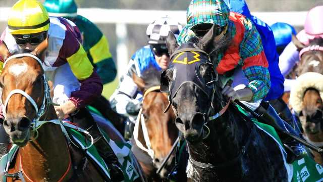 Raceday focus: Best bets, inside mail for Port Macquarie, Albury