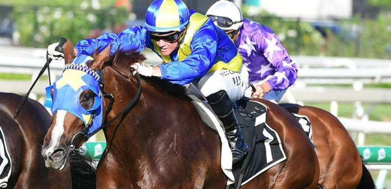 Toowoomba trainer Rex Lipp eyeing off another Queensland Oaks with Tycoon Evie