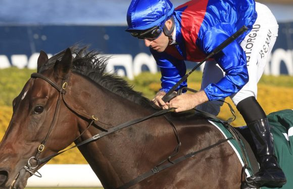 Luskin Star Stakes: Lost And Running set to snap up slot in The Everest