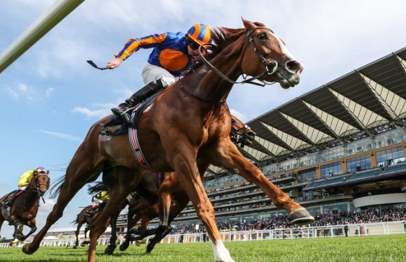 King George: Horse-by-horse guide to Ascot Group One as Sky Sports Racing's Mike Cattermole gives his verdict